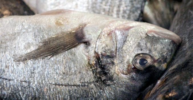 Técnicas básicas de cocina: Elegir pescado blanco o azul