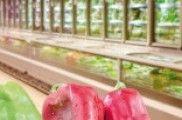 Verduras conxeladas: a dificultade de acabar coas faltas crenzas