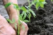 Producció ecològica: un mercat en auge