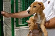 Las perreras ofrecen un servicio aceptable, pero necesitan mejoras en información y servicios